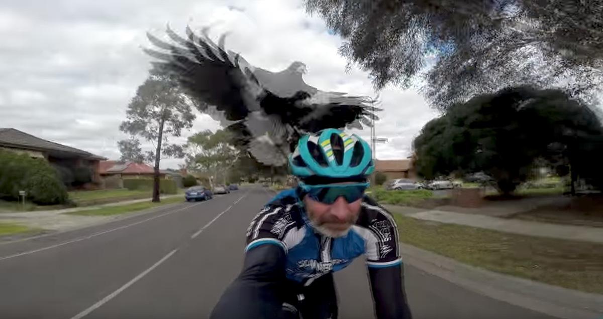 Najväčšie vtáky videá