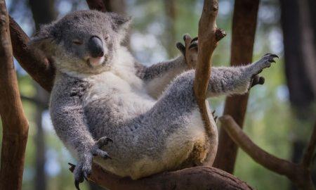 Zvláštne reflexy: Je naozaj lenivosť vrodená?